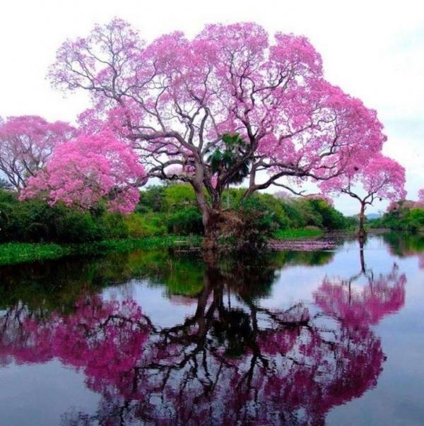 Ağaç ve göl